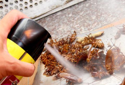 Điều không thể bỏ qua khi xịt thuốc diệt côn trùng.